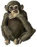 les-singes-de-la-sagesse