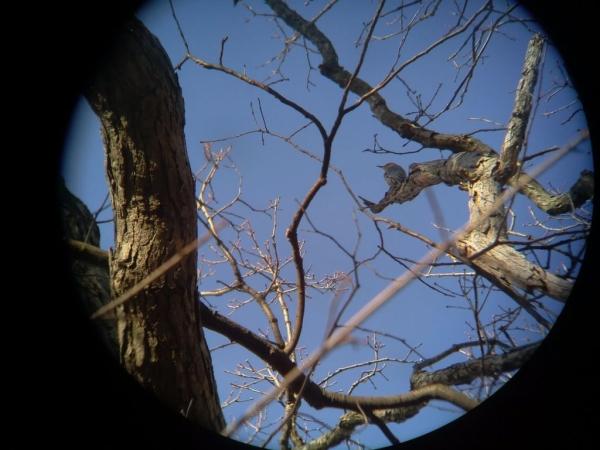 pinoculars_09