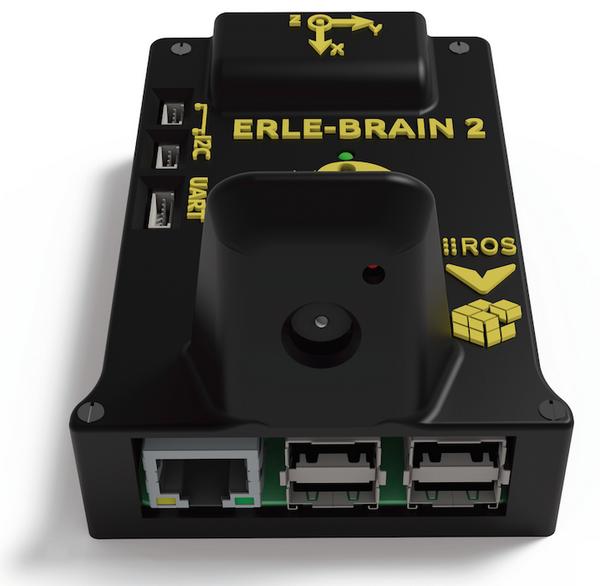 erle_brain2