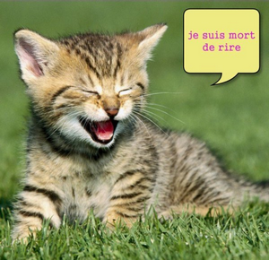 Chat mort de rire :)